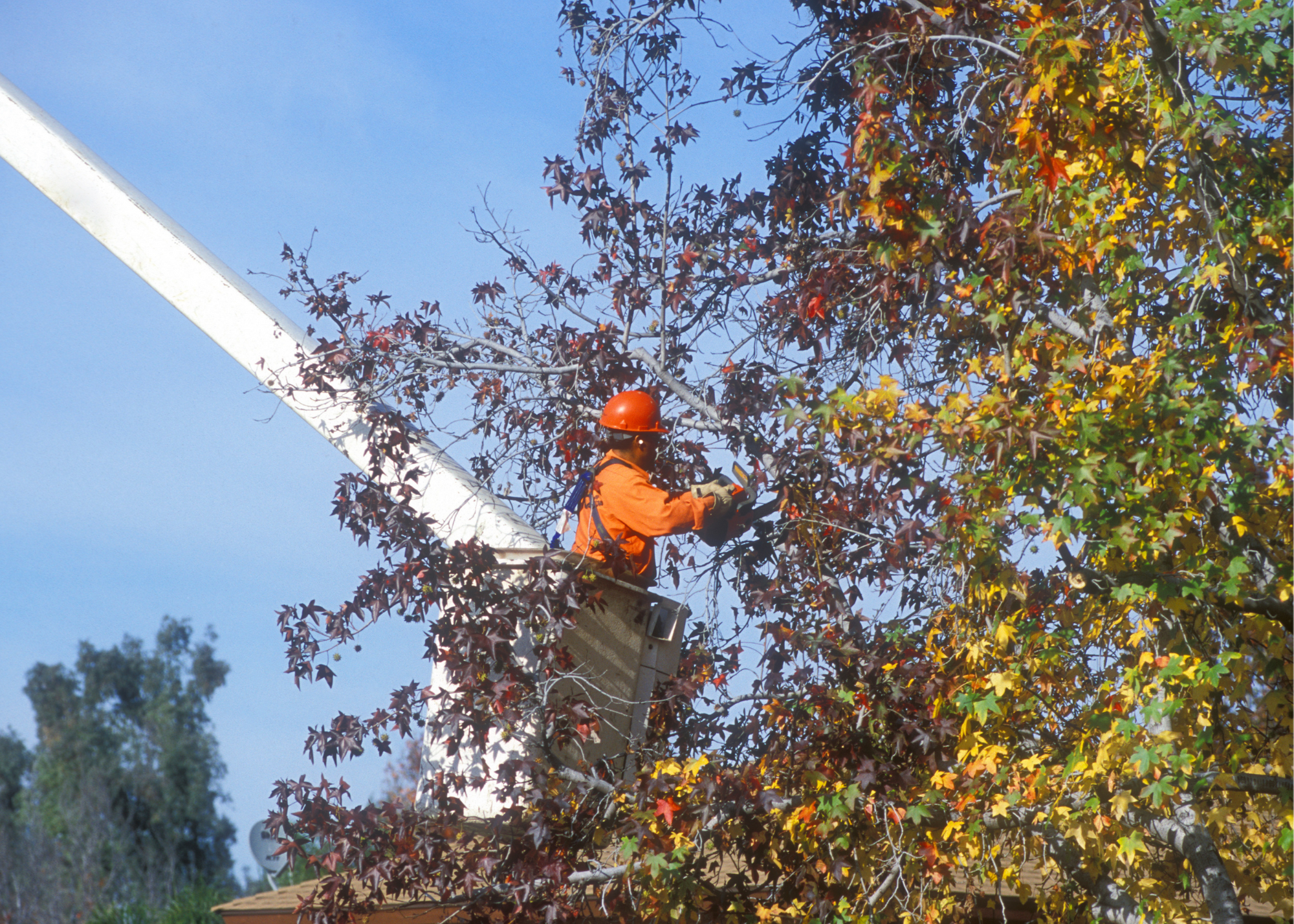 tree trimmers Lancaster
